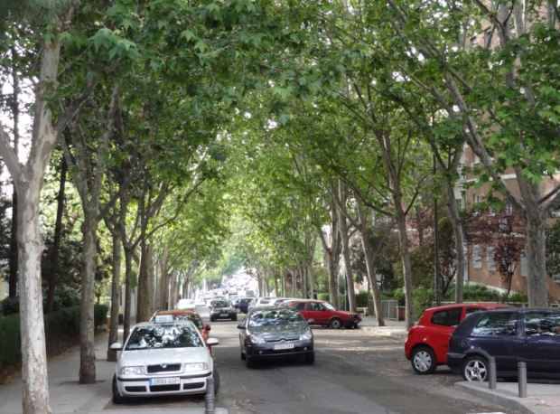 Conde de Cartagena street, in Madrid. Maples instead of tropical trees, altough also a good vegetal cover, and less stone on the surfaces