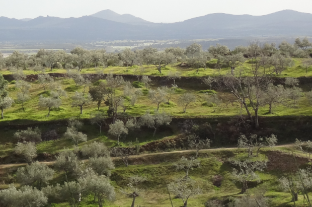 The price paid for each olive influences the survival of this landscape