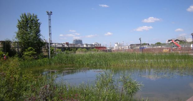 A part of the new ponds