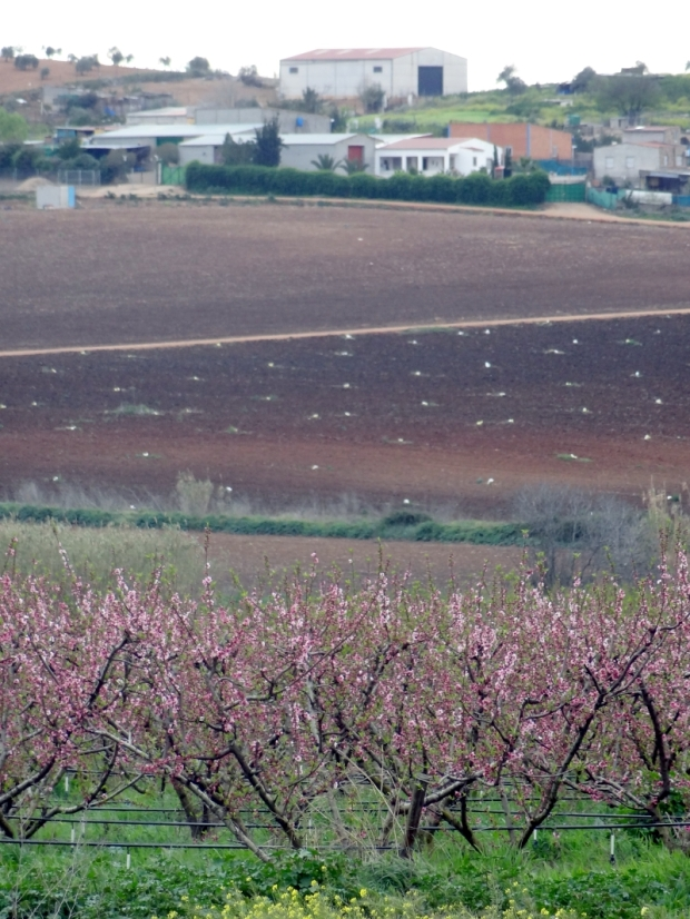 Somewhere in western Spain: the fruit trees on the foreground have clearly visible drip irrigation